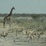 Namibia002