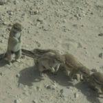 Namibia012